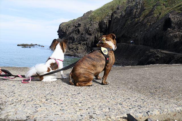 愛犬と登山