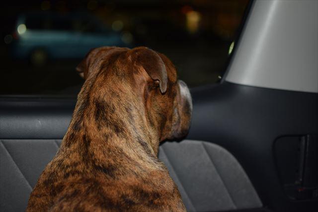 犬と車中拍