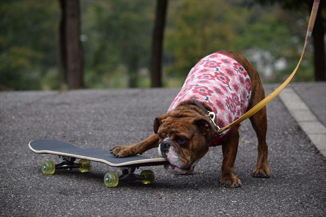 skateboard-dog001
