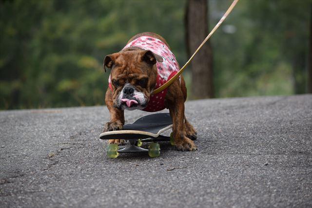 skateboard-dog002