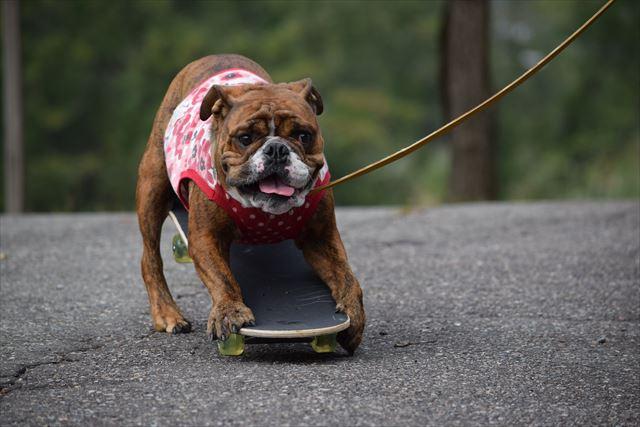 skateboard-dog003