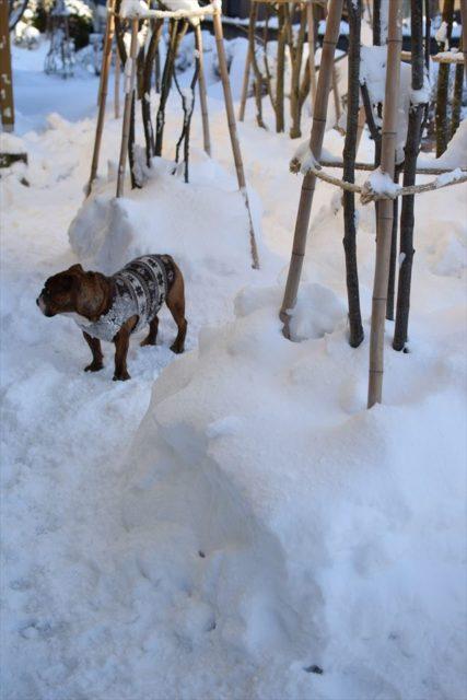 snow-dogrun005-1