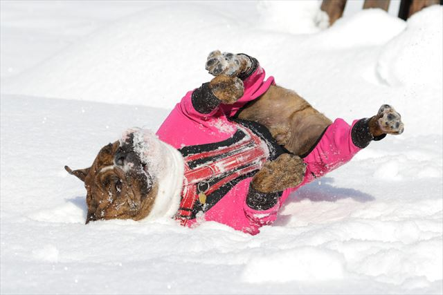snow-dogrun006