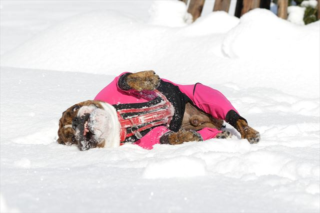 snow-dogrun007