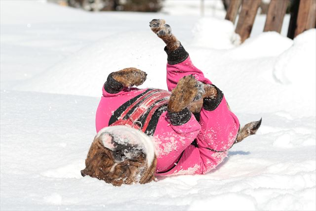 snow-dogrun008