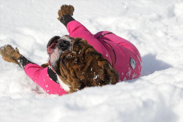 snow-dogrun009