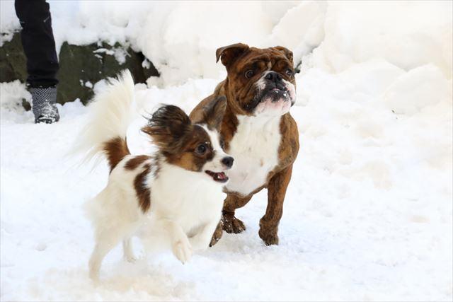 snow-dogrun011