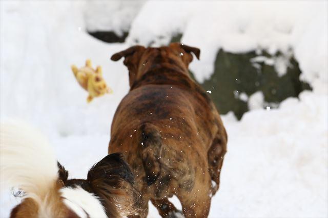 snow-dogrun017