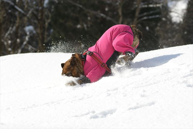 snow-dogrun022