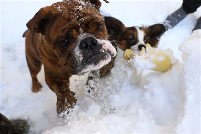 snow-dogrun023