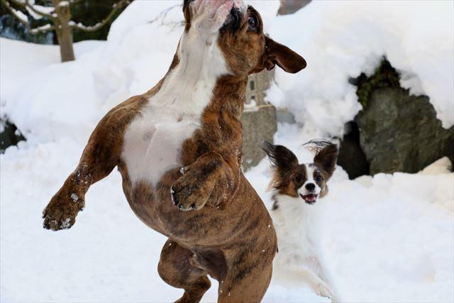 snow-dogrun029