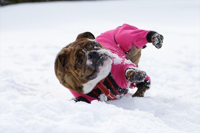 snow-dogrun032