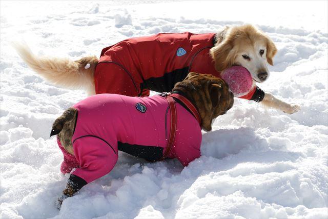 snow-dogrun036