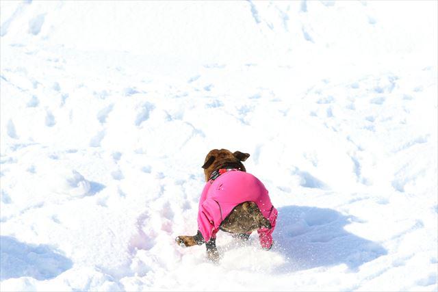 snow-dogrun039
