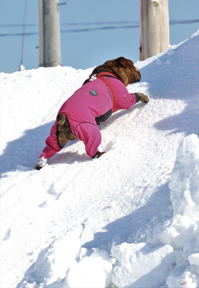 snow-dogrun040