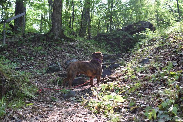 木漏れ日と犬