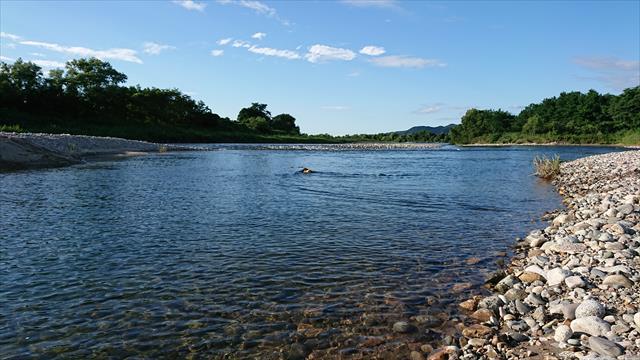 加治川の天然プール