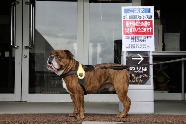犬とゴンドラ乗り場