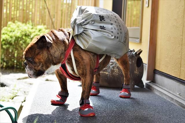 犬の防災訓練