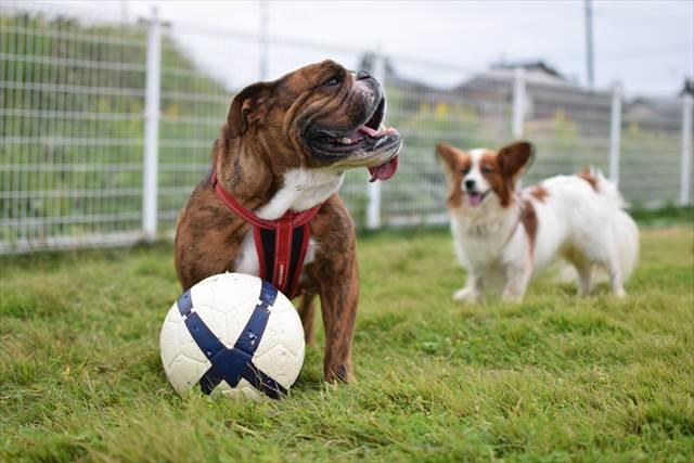 ボール遊びに満足