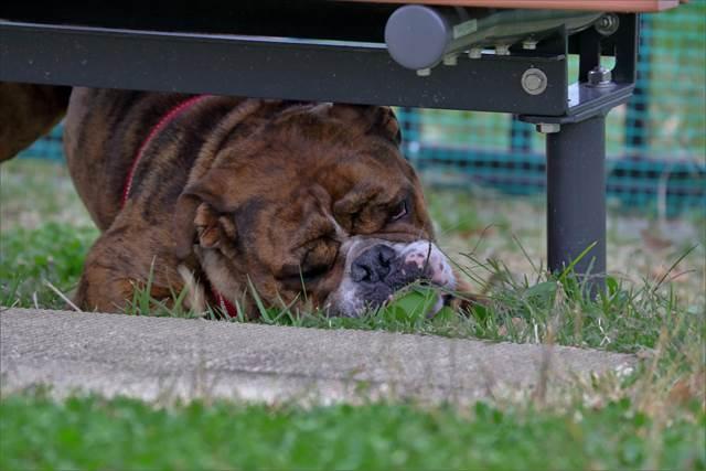 草を食う犬