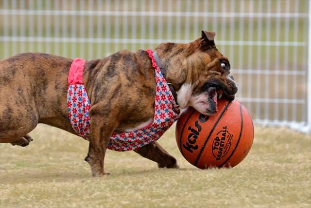 躍動する犬の筋肉