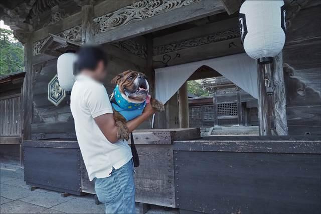 出雲大社で犬と参拝