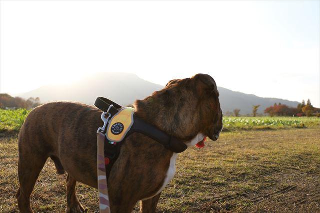 dog-walk009