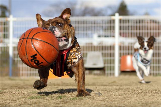 basketball004
