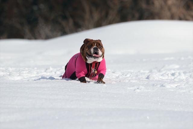 snow-dogrun002