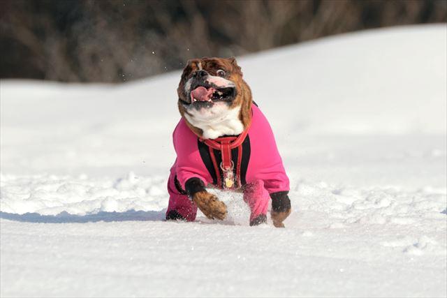 snow-dogrun003