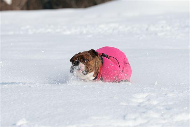 snow-dogrun004