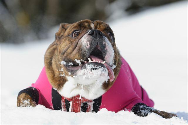 snow-dogrun013