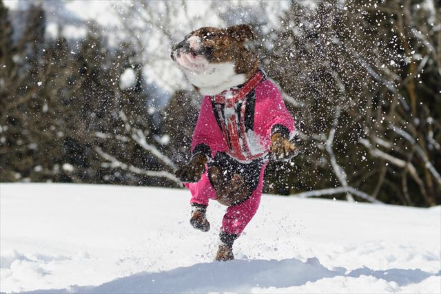 snow-dogrun018