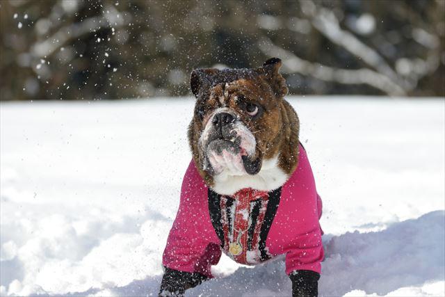 snow-dogrun019