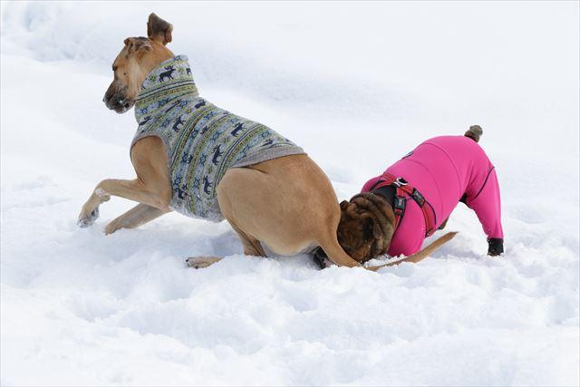 snow-dogrun031