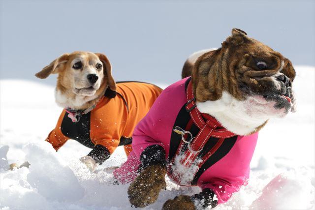 snow-dogrun035
