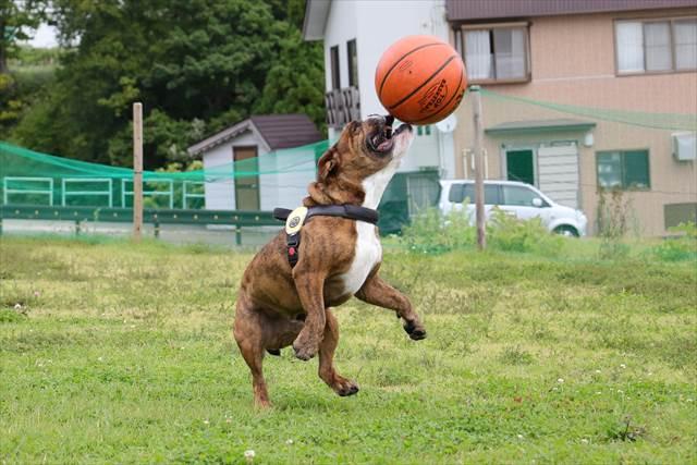 バスケットボールで遊ぶでんすけ君