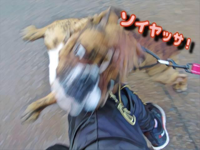 進路妨害する犬
