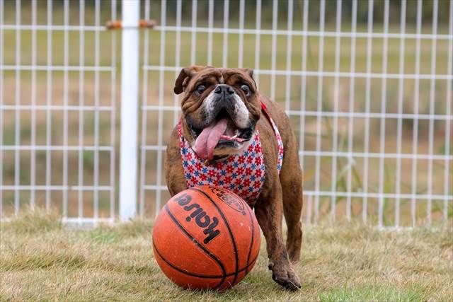 バスケットボール大好き犬