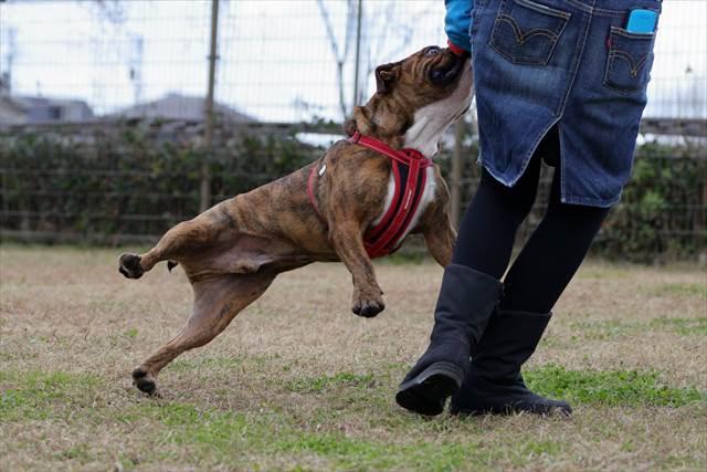 意地でもボールを放さない犬