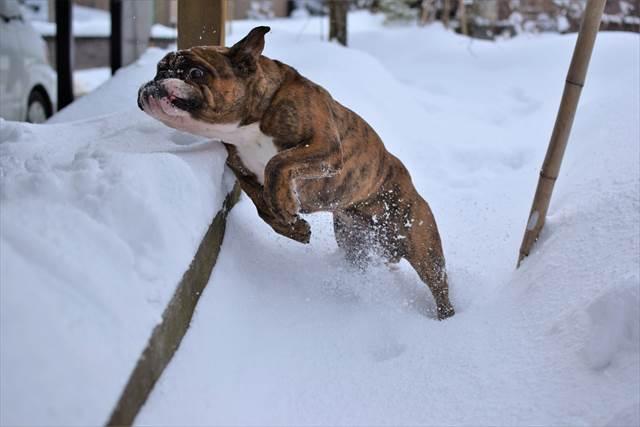 お庭の雪上ランでおおはしゃぎ