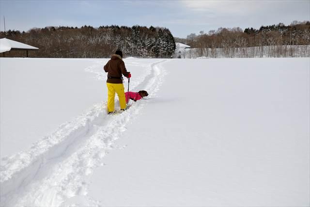 愛犬とスノーシューハイク