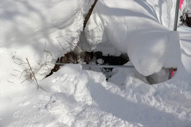 ブナのわき水(冬季)