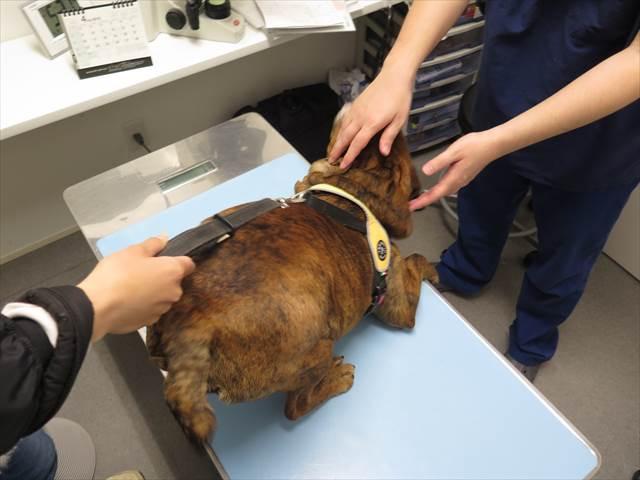 動物病院で検診