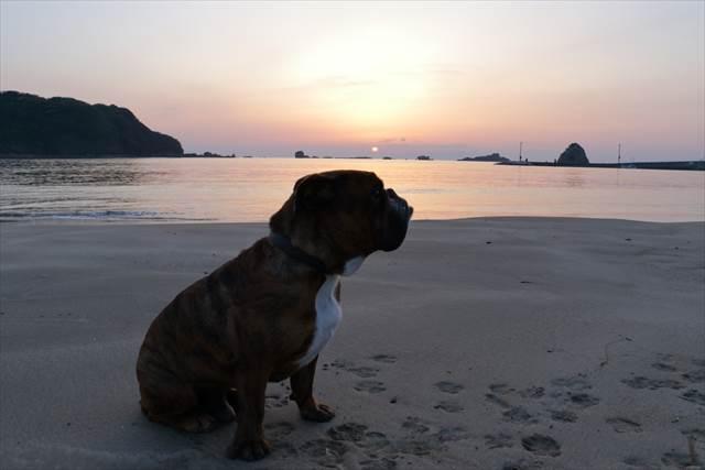 伊豆の海、日の出とブルドッグ
