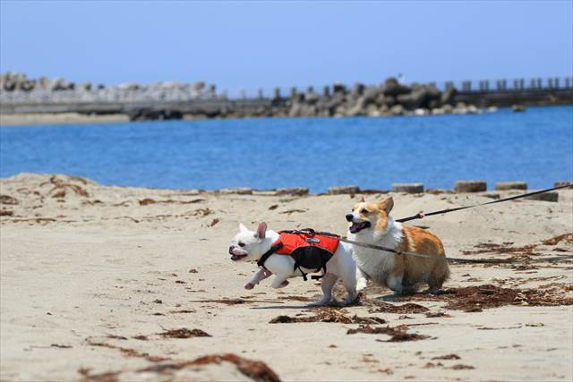日和山浜海水浴場で遊ぶ犬達
