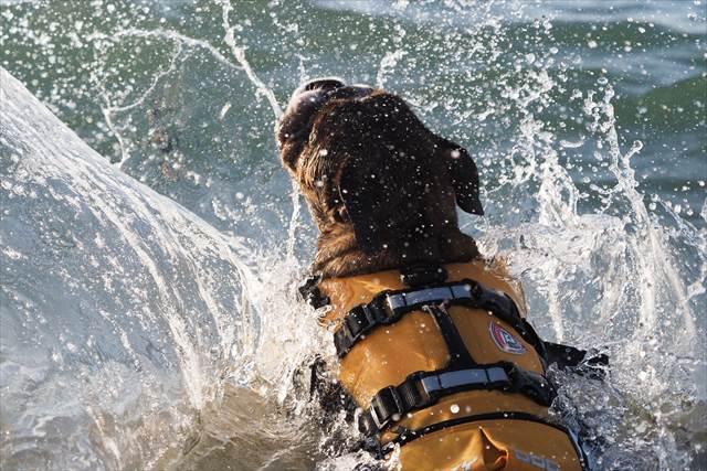 波を飛び越える犬