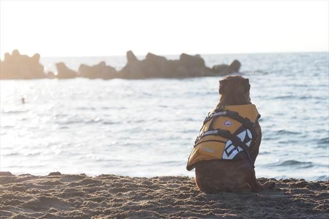 日本海を見て黄昏る犬