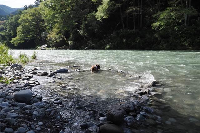 多摩川で川遊び